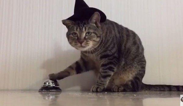 ベルを鳴らすパブロフの猫