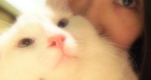 AKBたかみなのネコ