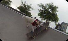 スケボーを楽しむ犬