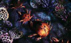 紙や紐を使った海底の様子アート動画