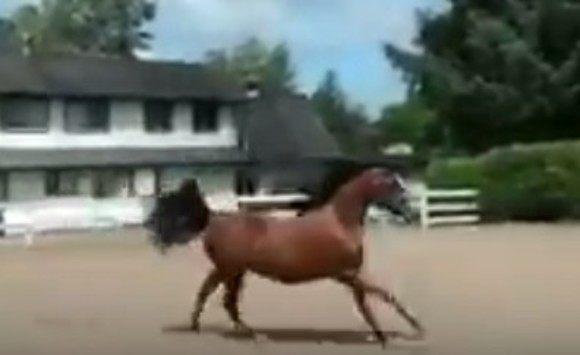 馬のフェンス抜けソリューション