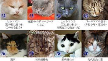 猫のマフィア、猫の暴力団組組織図、画像 (1)