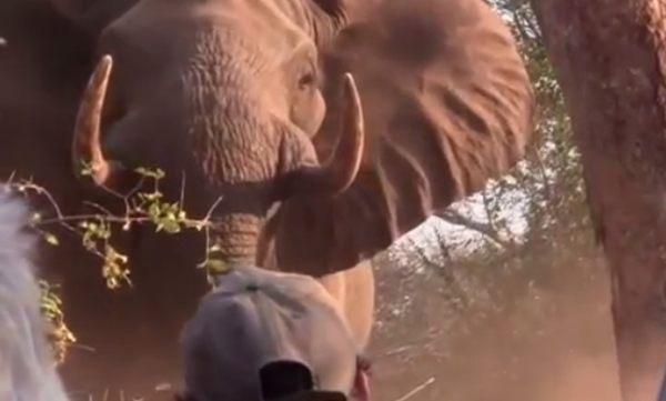 ゾウの突進