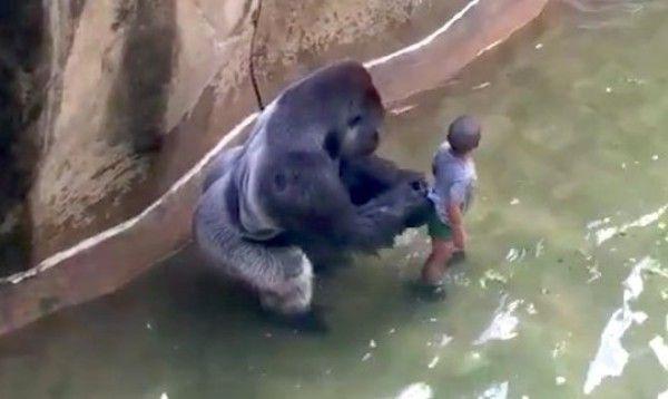 動物園のゴリラが子供