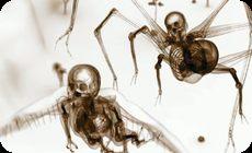 レントゲン昆虫の捕食動画。アート動画作品「Hominid」