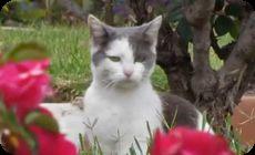 猫の鼻に虫がとまる