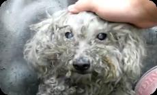 捨て犬フィオナ、動物愛護団体の人に救助される動画