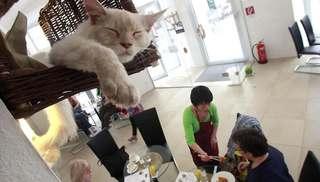 オーストリアの猫カフェオープン!! (1)