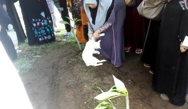 【動画】 ご主人様が埋められたお墓から離れないネコが涙を誘う!!