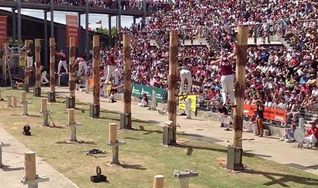 木こり選手権