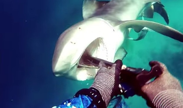 スピアフィッシングでサメと遭遇