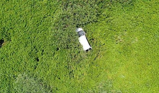 植物に覆われた「福島」