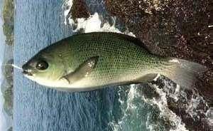 ゴールデンウィークの釣り情報釣果