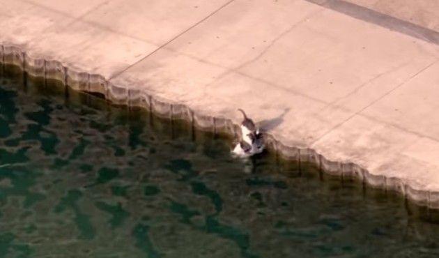 池に落ちたワンコの救出