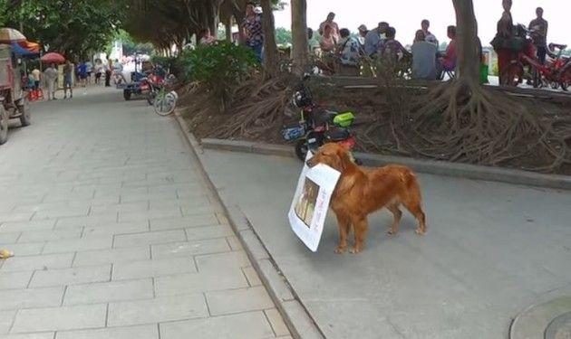 レストランの看板犬