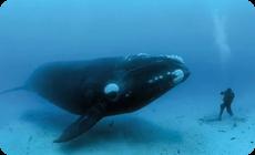 The BIG kissクジラの大きさ