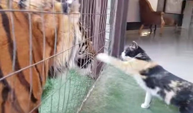 ネコとトラを一緒に飼っている