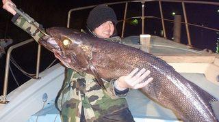 巨大魚、ラブカ、深海魚食べてみた、画像