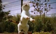 ネコの躍動的なジャンプのスローモーション動画