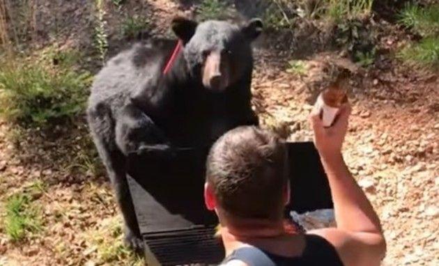 バーベキューにやってきたクマ