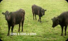 ノリノリの牛のCG