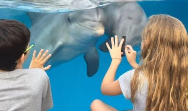 イルカと会話する方法