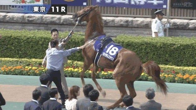 バク天する馬