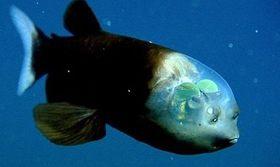 キモかっこいい魚の画像が集まるスレ