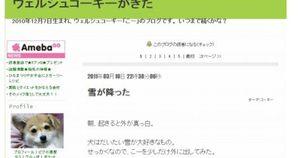 震災から更新が止まっているブログ (1)