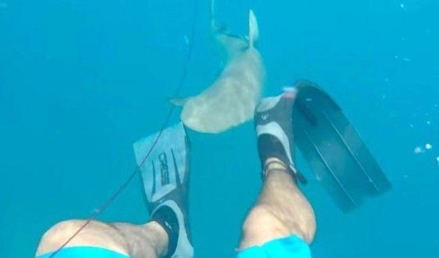 スピアフィッシング中にサメに襲われた人