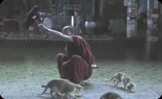 フラフープ、輪くぐりをする猫と僧侶 (1)