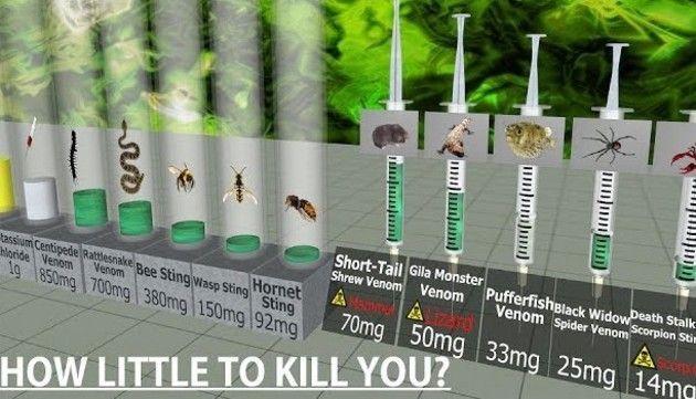 毒の致死量調べ