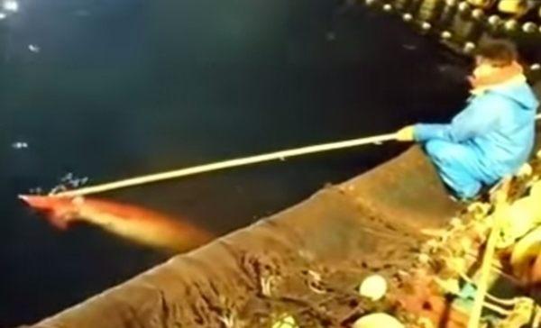 生きたダイオウイカを釣る