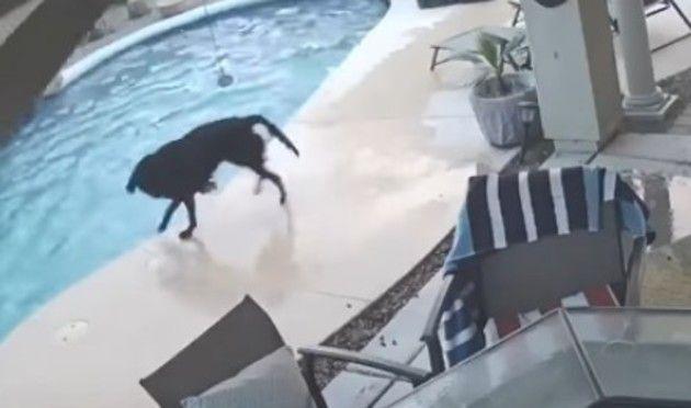 プールで助けるイヌ