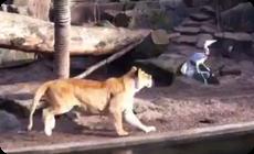 鳥を捕食するライオン