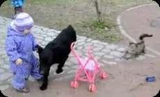 番猫、犬を追いかける猫 (1)