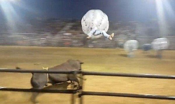 ミネソタの闘牛