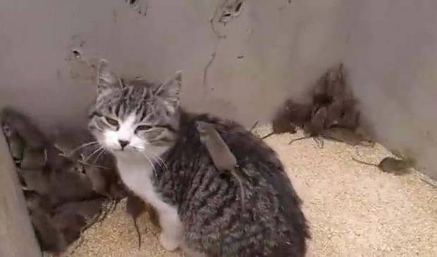 ネズミに囲まれた猫