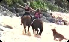 馬の強烈な一蹴りを喰らいよろけるワンコ