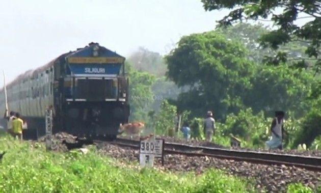 【閲覧注意!】 インドの列車に聖なるウシが撥ね殺されてしまう!!