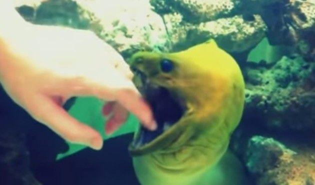 魚が遊んでいる様子まとめ