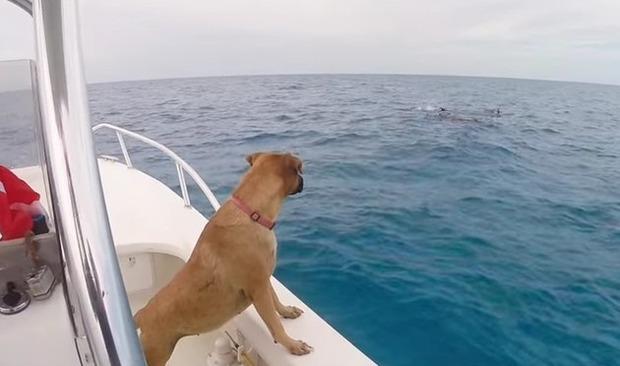 犬がクジラの群れと遭遇
