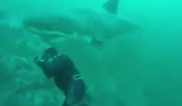 サメに頭を叩かれる人