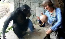 動物園のチンパンジーが赤ちゃんを殴る蹴る