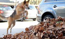 面白い犬の動画