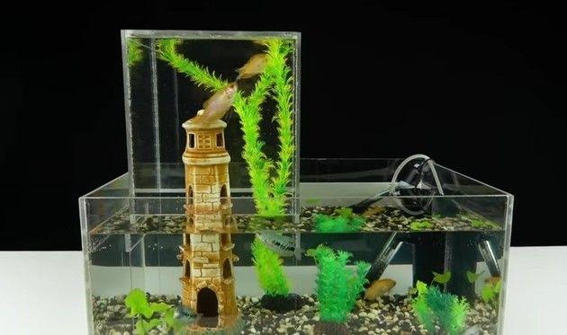 アクアリウム水槽DIY