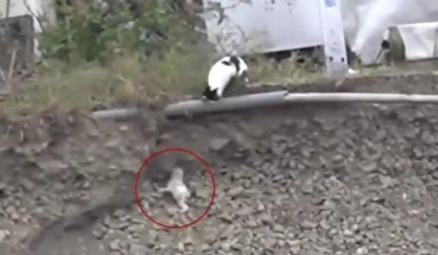 崖下に落ちた子猫の救出
