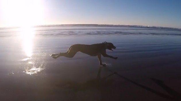海岸線を走るイヌ