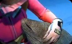 ウツボがサメを襲うなど