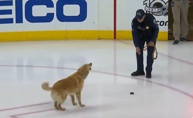 スケートリンクで走るイヌ